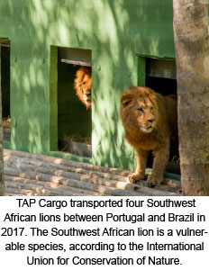 TAP Cargo transported four Southwest African lions