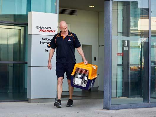 iata-certifies-australias-jetpets-with-ceiv-for-live-animals-air-cargo