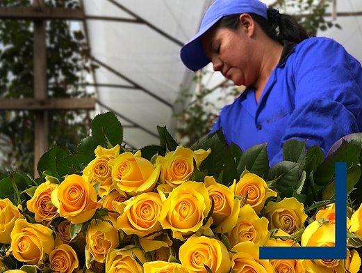 AFKLMP Cargo gains FlowerWatch certification for its Bogota fresh flower station