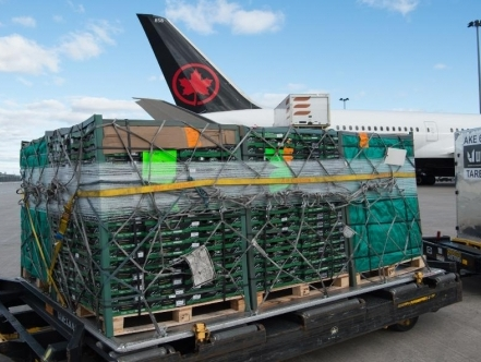 Air Canada Cargo announces launch routes for newly converted freighter aircraft