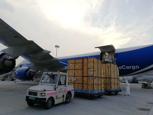 ABC gives 66 giraffes a lift from Johannesburg to Zhengzhou