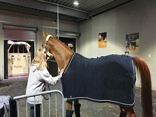91 horses heading to Shanghai get to experience Emirates Equine