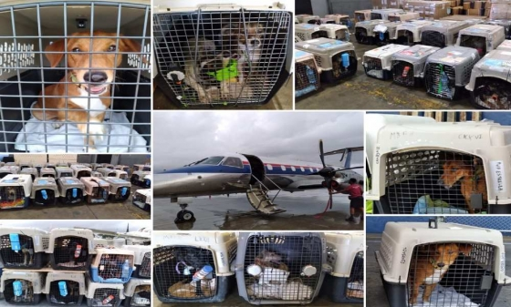Intradco Global rescues 88 dogs with Save Our Scruff from Costa Rica