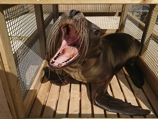 Kerry Logistics arranges first class travel for sea lions from UK to China