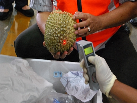 Maskargo flies frozen whole durians to China