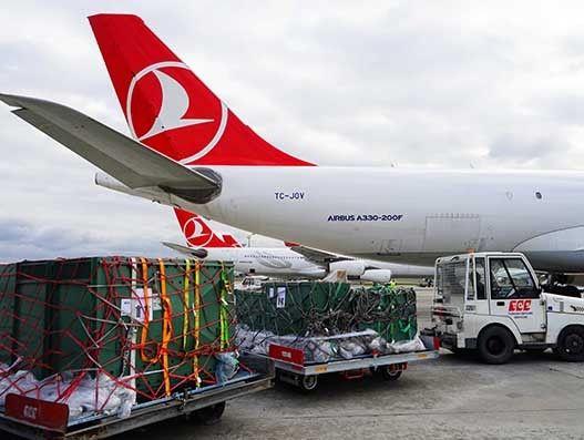 Turkish Cargo transports Humboldt Penguin to China from Riga Zoo