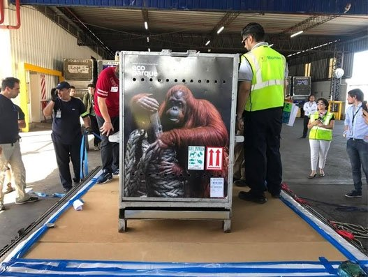 American Airlines Cargo moves orangutan Sandra safely from Argentina to US
