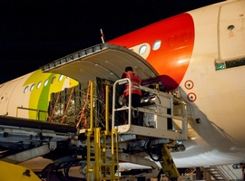 Southwest African lions fly across the Atlantic aboard TAP Portugal