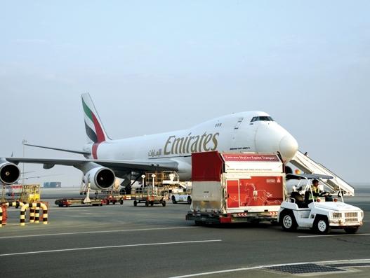 Horses reach Dubai onboard Emirates SkyCargo