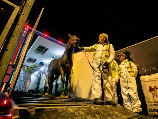 €3m airlift of Irish horses to China from Shannon Airport