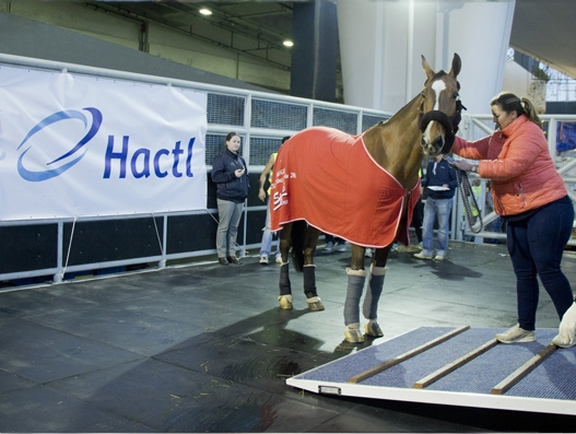 Hactl handles valuable equine for Longines Masters event