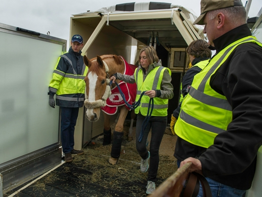 Qatar Airways Cargo transports European equine guests to Omaha, Nebraska