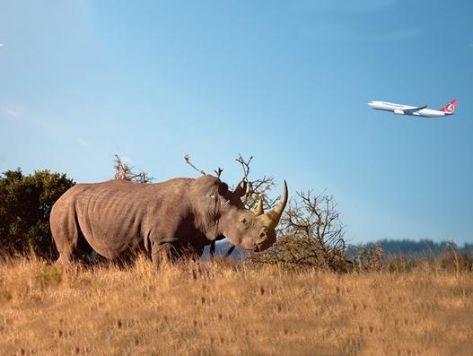 Turkish Cargo carries five endangered white rhinos to Shanghai