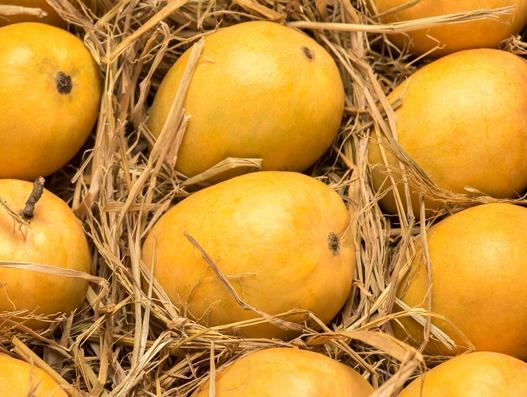Emirates lifts record volumes of mangoes and perishables from Mumbai, India