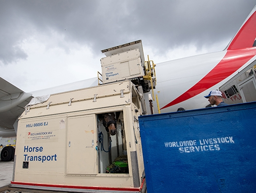Emirates SkyCargo flies racehorses to Dubai and across the globe