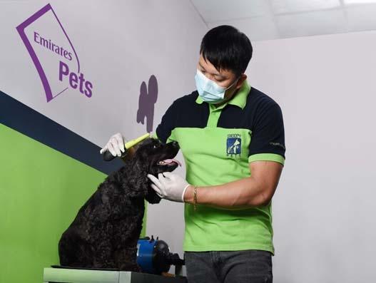 Emirates SkyCargo launches new product to transport pets, Emirates Pets