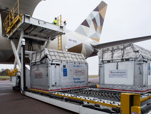 Etihad Cargo transports 72 horses on a single flight