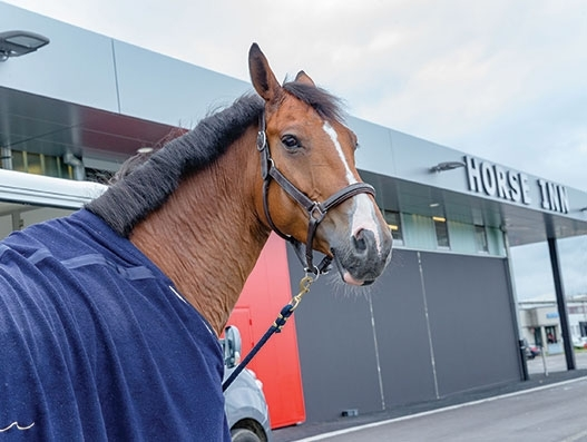 500 horses to make a stop at Liege Airport's Horse Inn facility ahead of WEG