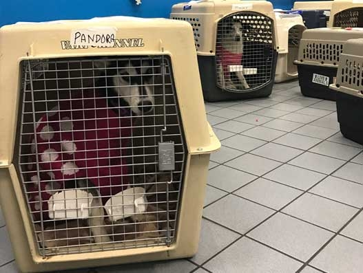 Rescued dogs reach new home via American Airlines Cargo flights