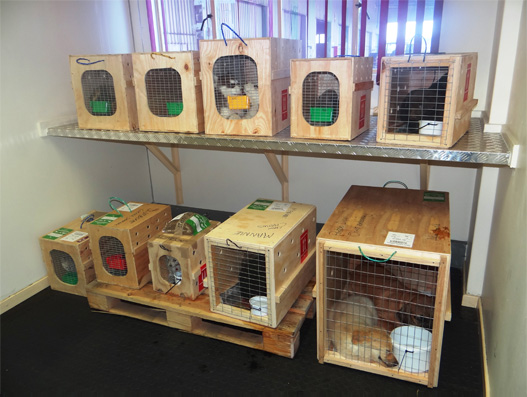 South African Airways Cargo Pet Lounge opens at Cargo ORTIA Terminal