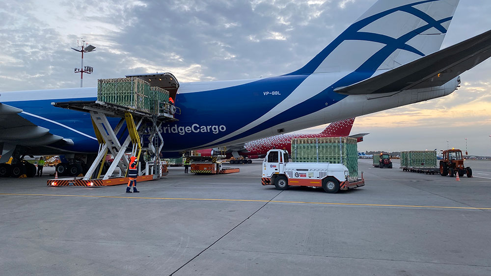 AirBridgeCargo completes first charter flight with elite breeding pigs
