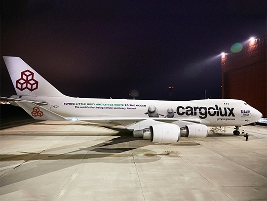 Cargolux to help relocate two beluga whales from China to Iceland