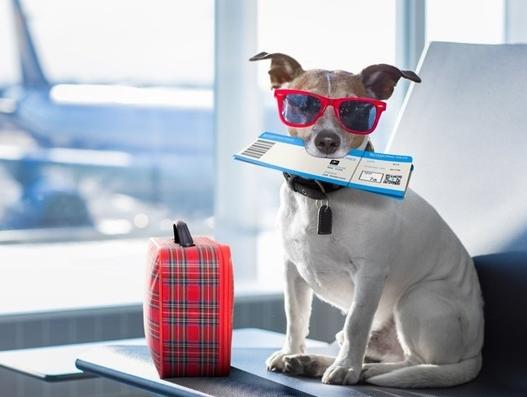IATA, ATA to push for adoption of CEIV Live Animals programme
