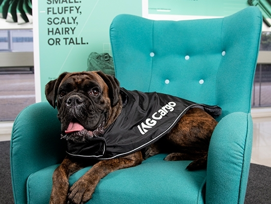 Pets get special attention at London Heathrow as IAG Cargo unveils new pet transport service