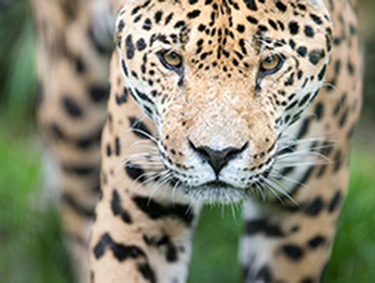 New effort by IATA to help cut illegal wildlife shipments
