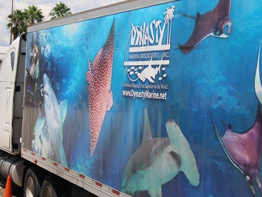 Sharks reach their new home in Brazil with the help of American Airlines Cargo