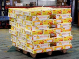 Kempegowda International Airport (BLR), Bengaluru has processed 483,460 kgs of mangoes in four months from March to June, 2021.  The month of June witnessed the highest movement of mangoes with 169,882 kgs. A total of 158,936 kgs were processed in May, 110,886 kgs in April and 43,776 in March.