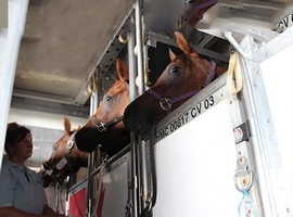July 18, 2018: Rickenbacker International Airport, airport in Ohio dedicated to cargo, has invested $423,000 to renovate its animal transport facility. Some of the major changes introduced through the renovation project that was started at the beginning of the year are twelve new animal stalls have been added to provide space for livestock to rest […]