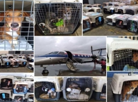 Intradco Global is used to dealing with animals of all shapes and sizes, but on this occasion a paw-fect mission was completed when they aided in the rehoming of 88 rescue dogs. The dogs were flown from Costa Rica to Canada where they would travel onwards to their new homes.