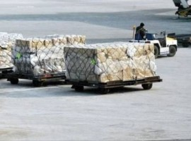 Air cargo capacity slightly increased compared to the -26 per cent decline for the previous two weeks and the Transpacific is back at 2019 levels.