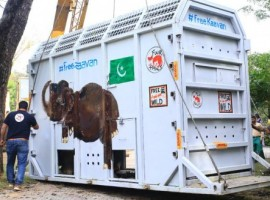 The carefully planned temperature-controlled multimodal journey of Kaavan  started from Islamabad and ended in a sanctuary in Cambodia.