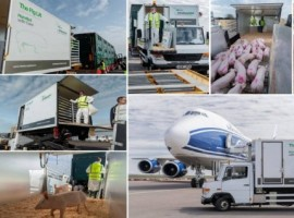 The innovative Intradco Global Pig Lift comprises of a custom-converted van which has been modified to enable pigs to transfer from their lorry transport to their crates, at varying heights, without having to navigate any ramps.
