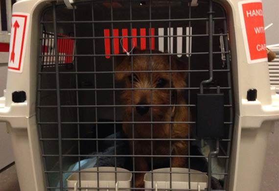 AA Cargo transports dog from AMS to PHL